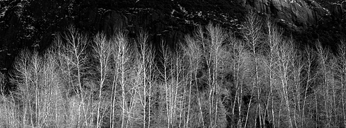 Grove of trees on the bank of the Merced River