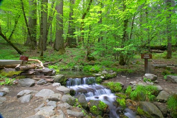 Another View of Fern Spring