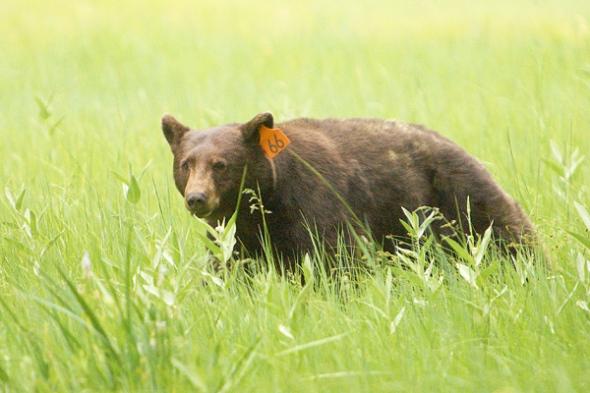Bear #66